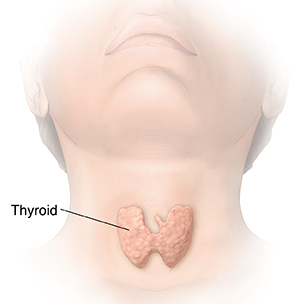 Front view of head and neck showing thyroid.