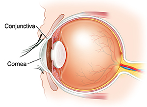 Side view cross section of eye.
